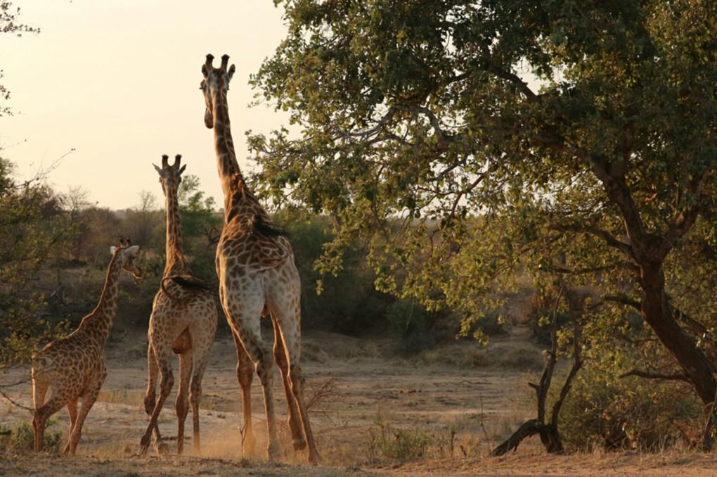 ❸ Krugerpark