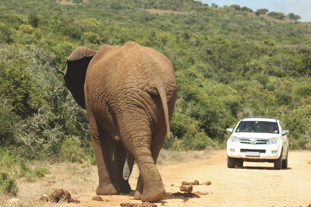 ❼ Addo Elephant National Park
