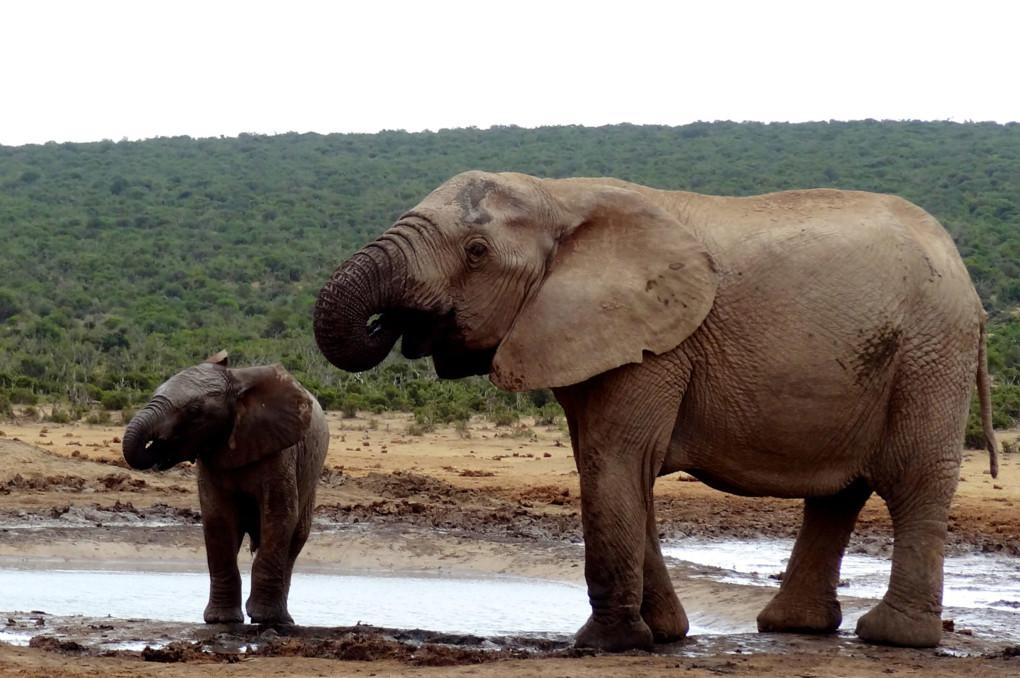 ❺ Addo Elephant National Park