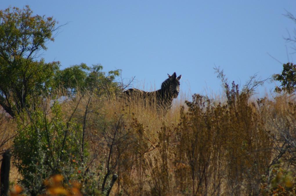 ❷ Pilanesberg