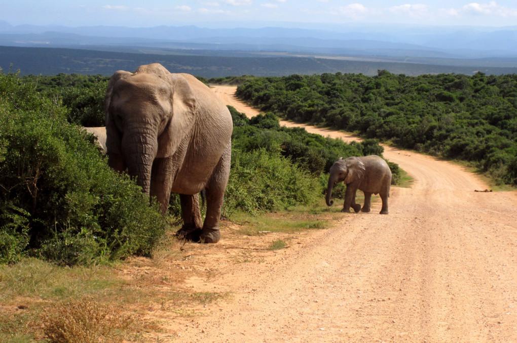 ❾ Addo Elephant National Park