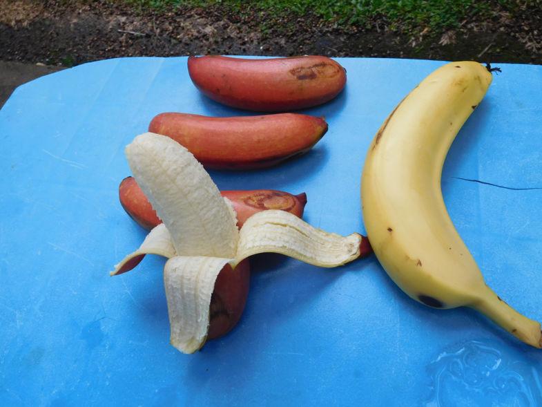 Een rode banaan