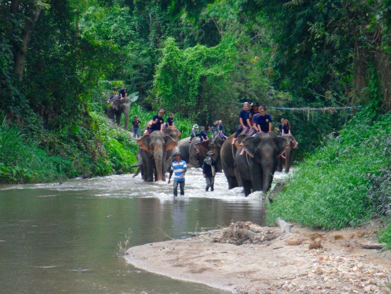 De olifanten, een hoogtepunt van de rondreis