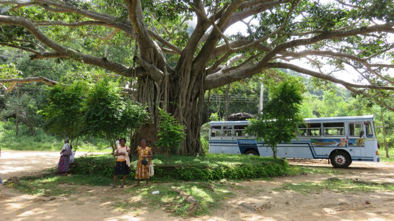 Sri Lanka zo mooi zo puur