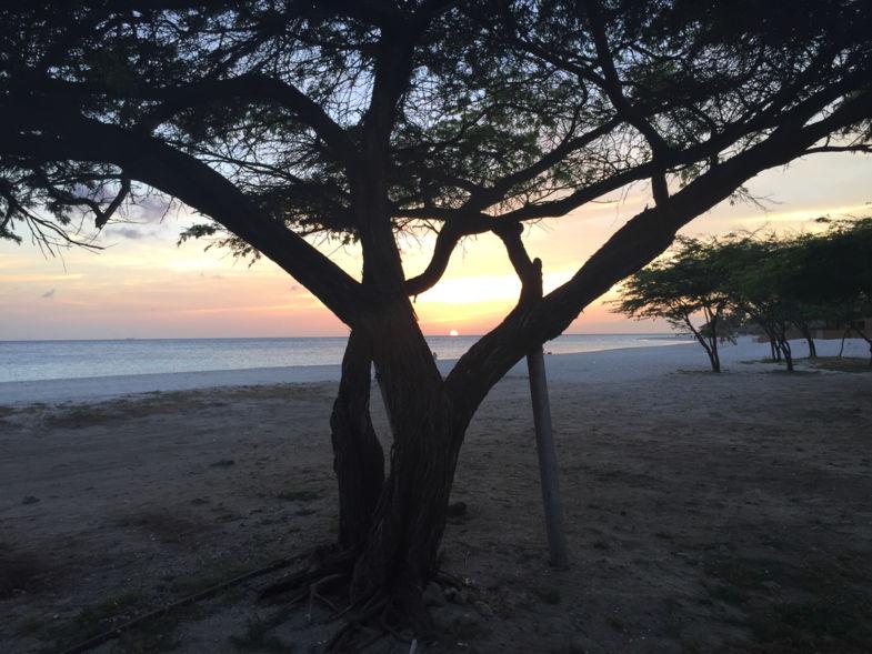tussen boom en zee