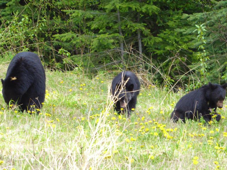 Ik zag 2 beren, oh nee 3