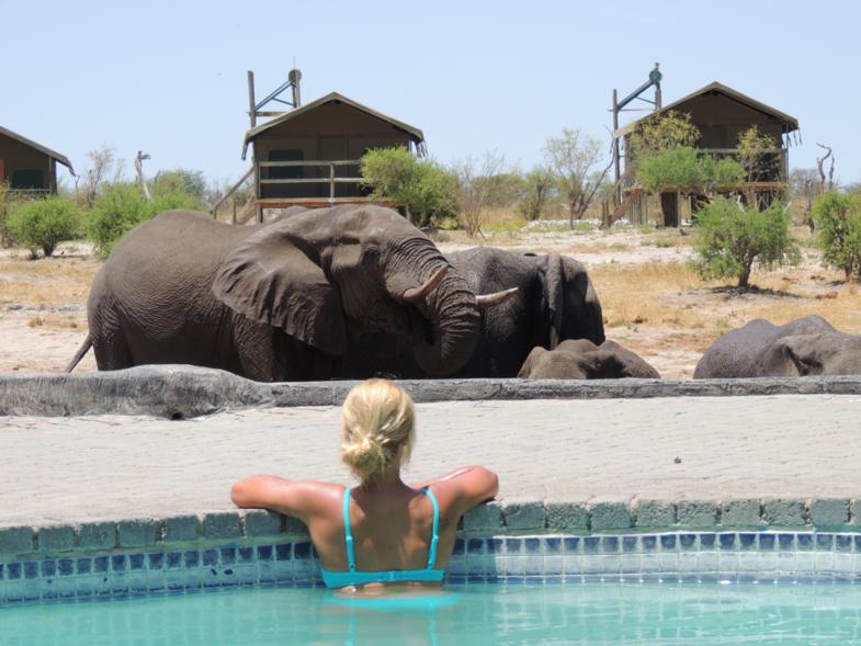 Elephant Sands, where elephants rule!