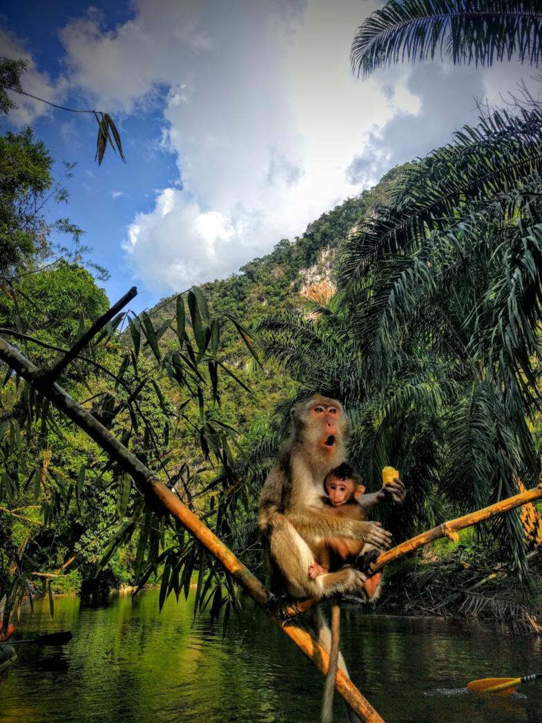 Monkey say monkey do!