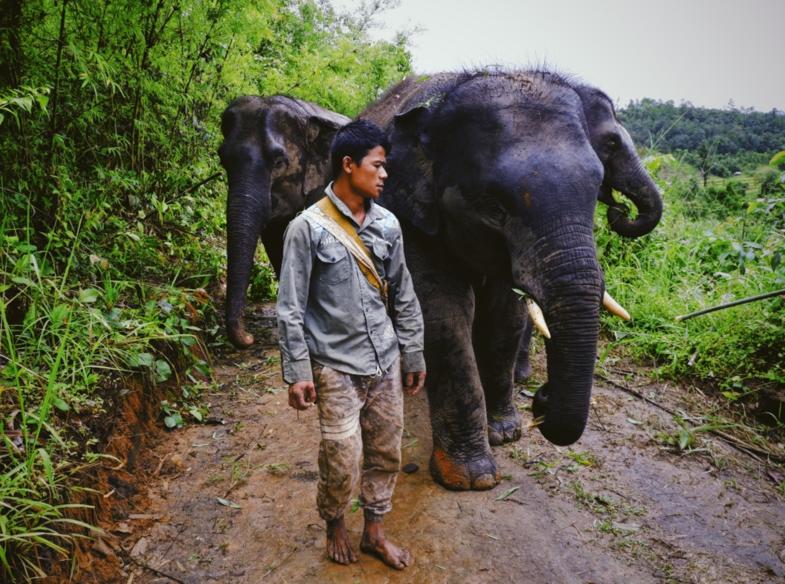 Wandelen met olifanten