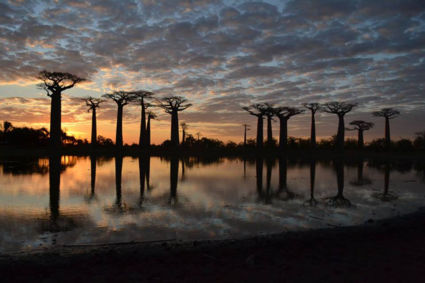 World upside down - Baobabs Madagascar