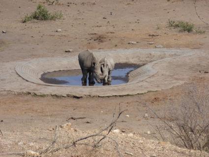 Toch een waterplasje gevonden - Kruger 2016