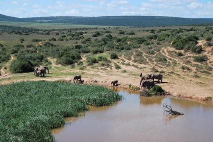 Addo Elephant Park 2014