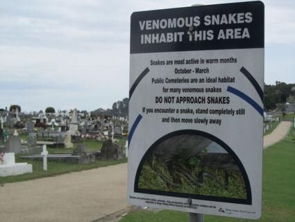 Giftige slangen op het kerkhof