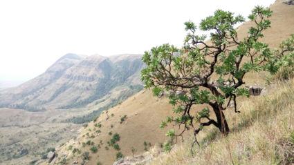 De Drakensbergen op z'n mooist
