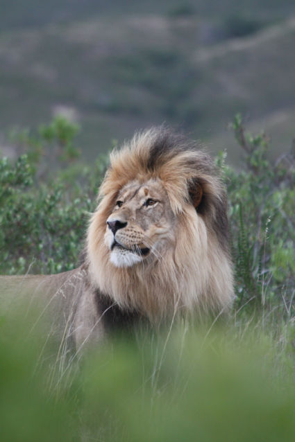 Gracefully Arrogant.. @ Gondwana Game Reserve