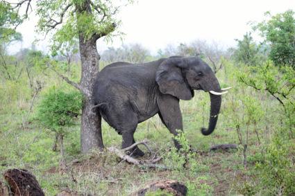 Jeuk ook olifanten hebben dat