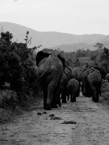 Olifantenfamilie op pad!