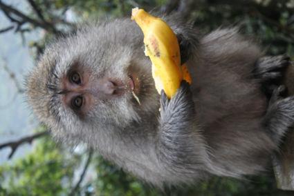 Heerlijk zo'n banaantje