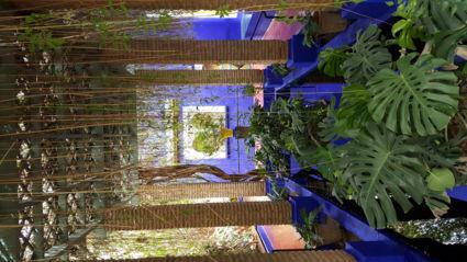 Jardin Le majorelle