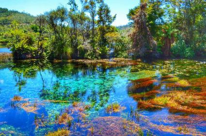 één groot kleurenpalet bij de Te Waikoropupu Springs