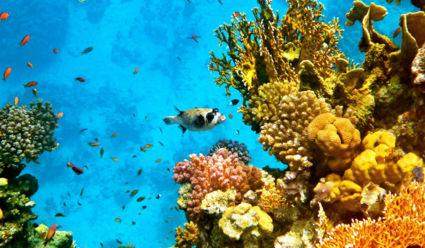De bijzondere onderwaterwereld van de Rode zee