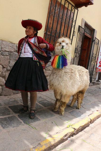 Lama die op het baasje gaat lijken...