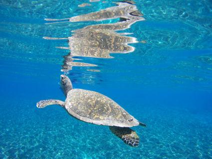 Adembenemend prachtige schildpad @ Turtle Point