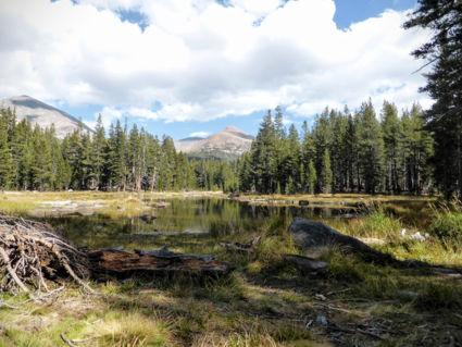 Drassig Yosemite National Park