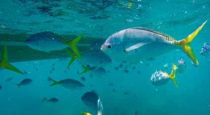 Onderwaterwereld bij de Whitsunday Islands