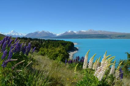 Lake Pukaki met Mount Cook