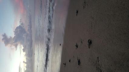 Reizen met een missie: het redden van baby lederschildpadjes!