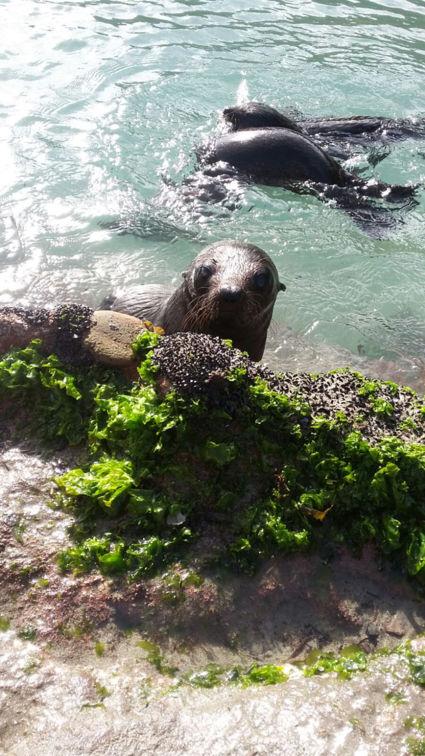 Deze vrolijke vriend kwam ons gedag zeggen op de golden bay @laat de lente beginnen