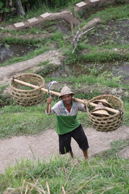 Hij wilde graag poseren, rijstvelden omgeving ubud
