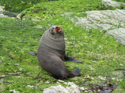 Fred, the happy posing seal