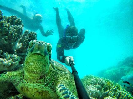 Vrolijke schildpad neemt selfie met mensen