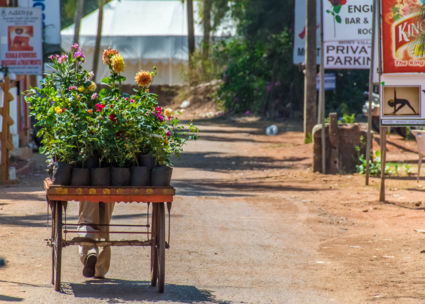 The florist in Goa India makes me happy