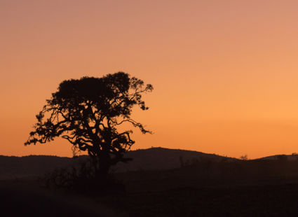 Zonsondergang in Welgevonden...