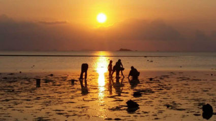 Locals searching for sea animals(?) during sunset