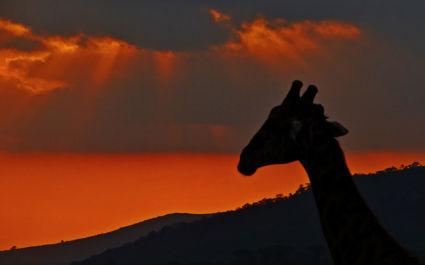 Sunset in Hluhluwe-iMfolosi National Park