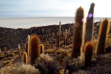 Zonsopkomst vanaf Isla del Pescado in Salar de Uyuni