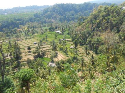 rijstvelden in Lombok