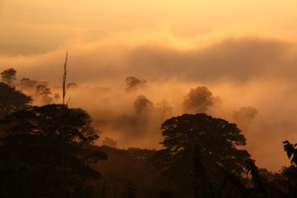 Opkomende mist in de avondschemering