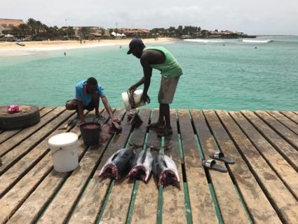 De lokale vismarkt op Sal
