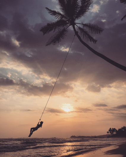 Playing and swinging  of the palm tree