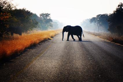 Waar de wegen van mens en dier elkaar kruisen