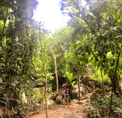 Junglebook Colombia