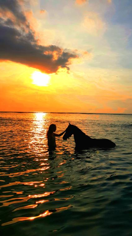Seahorse rendez vous