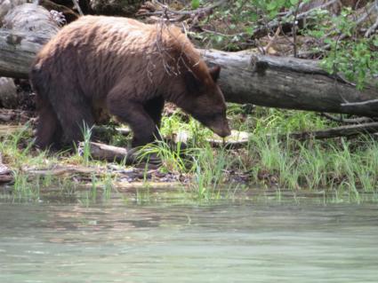 Een indrukwekkende ontmoeting met een beer