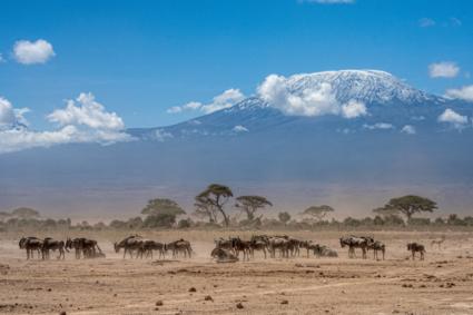 Dusty Amboseli National park...