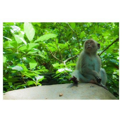 One of the many monkeys in Ubud